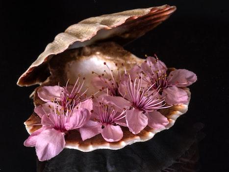 Purple Flower Inside Sea Clamp