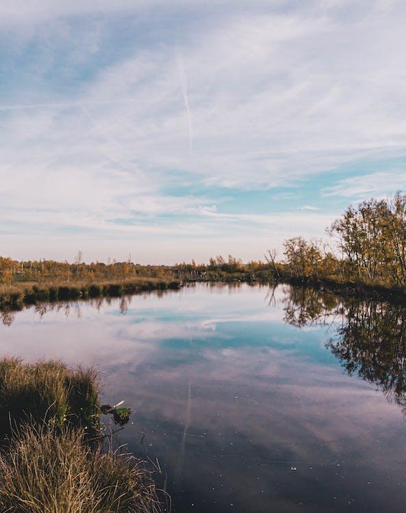 bažina, Holandsko, jezero