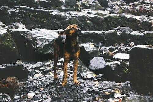 Foto stok gratis alam, anjing, bebas, binatang