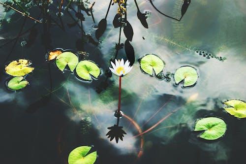 Foto stok gratis air, alam, bunga, fotografi alam