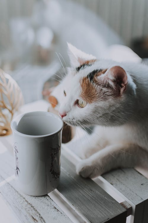 White and Orange Cat Beside White Ceramic Mug