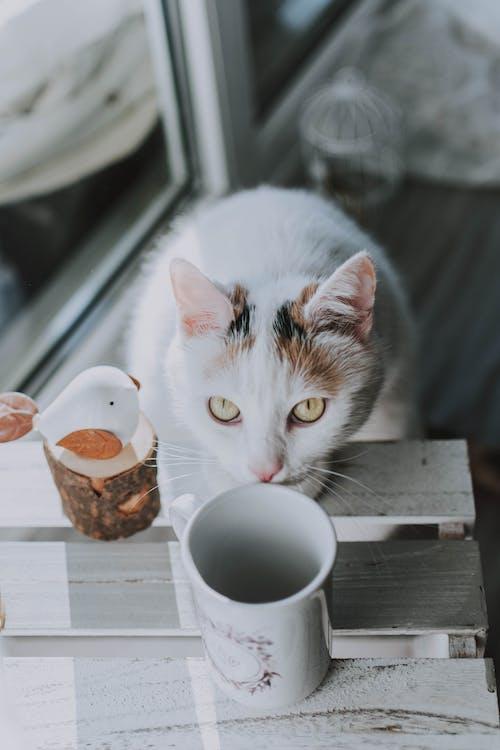 dyr, dyrefotografering, innendørs