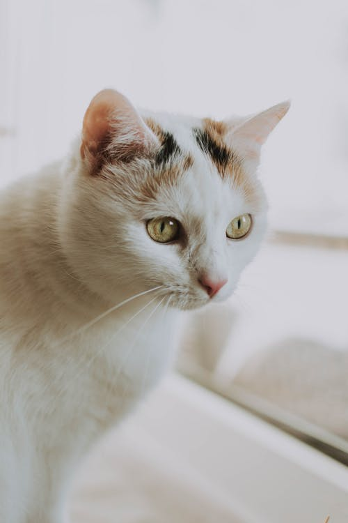 Portrait Photo of White and Brown Cat