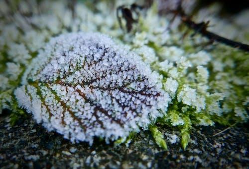 Безкоштовне стокове фото на тему «іній, великий план, зелений, зима»