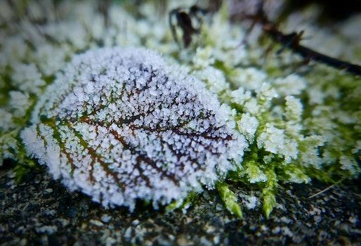 Free stock photo of snow, nature, garden, winter