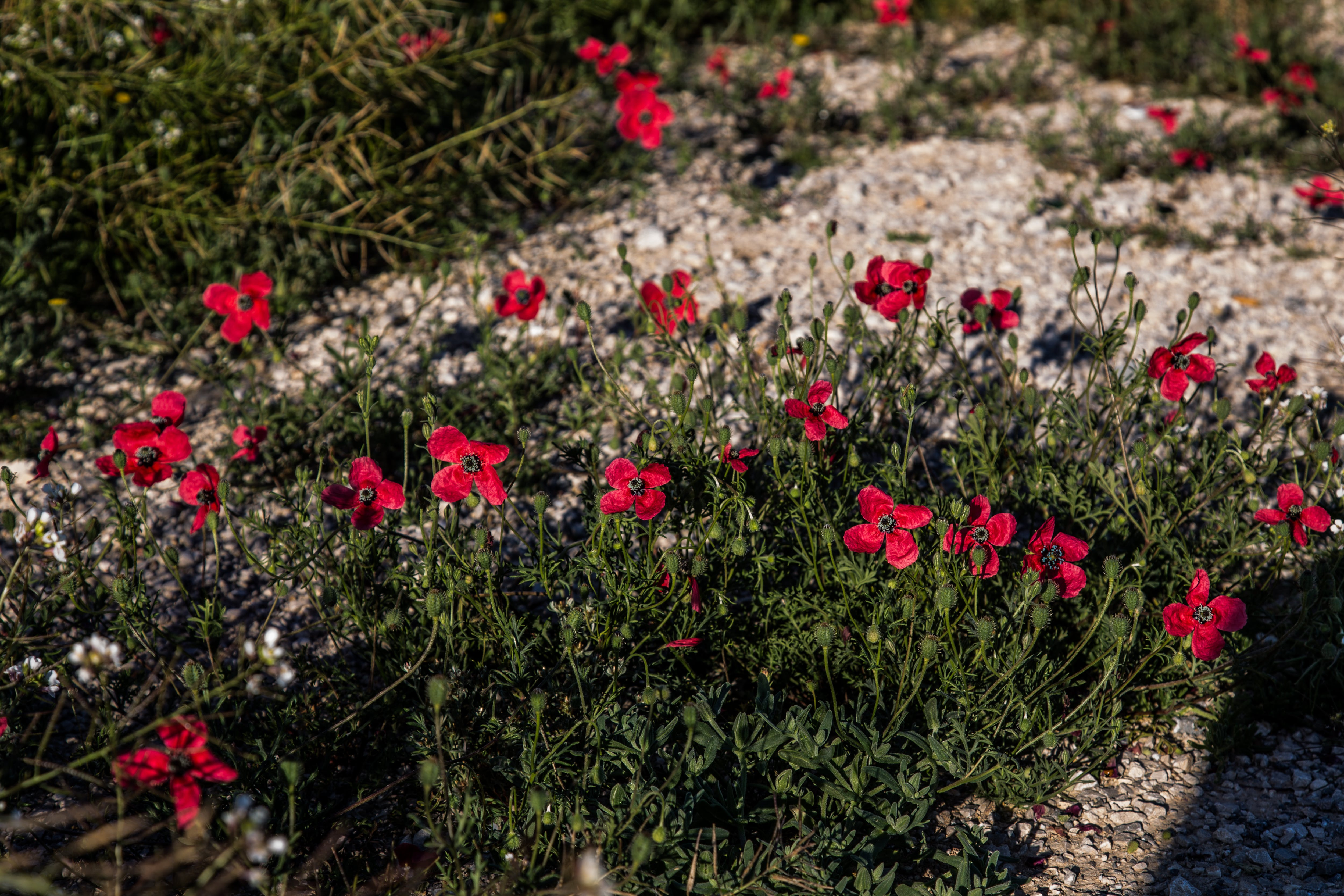 Free stock photo of Flowers without garden, spring