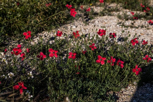 Foto d'estoc gratuïta de flors sense jardí