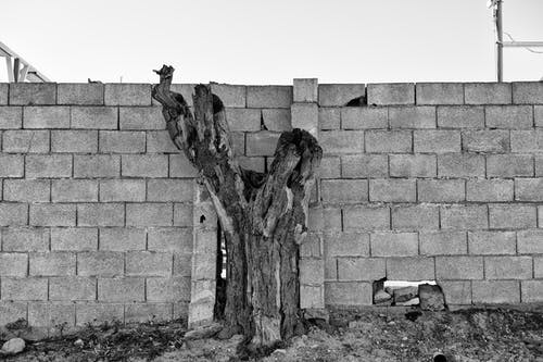 Foto d'estoc gratuïta de bonic arbre mort