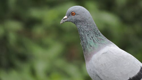 Shallow Focus Photo of Pigeon