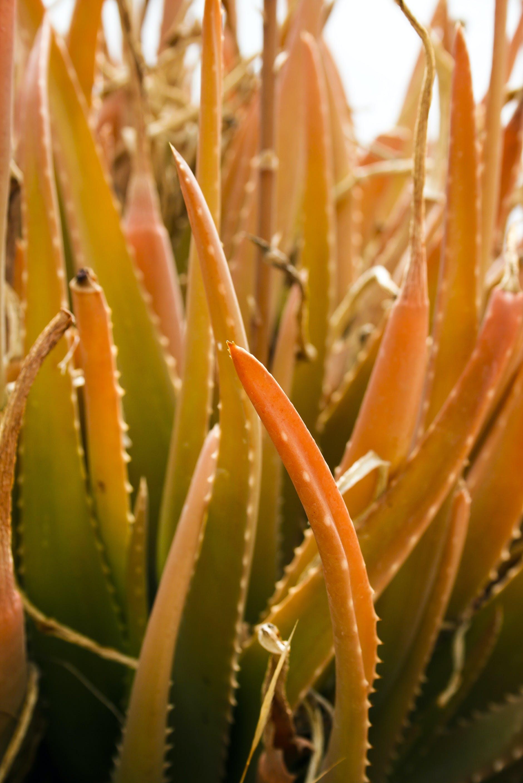 Free stock photo of nature, plant, orange, green