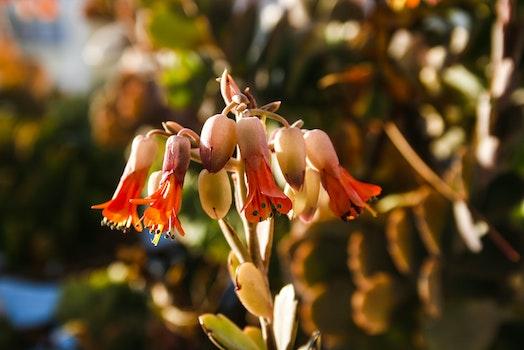 Free stock photo of light, nature, sunshine, colorful
