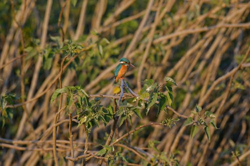 Shallow Focus Photo of Bird on Tree Branches