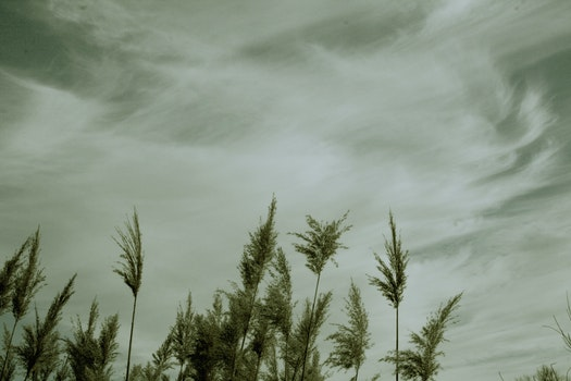 Free stock photo of nature, sky, plants, dark clouds