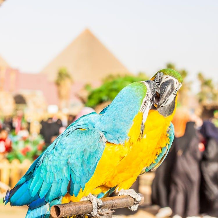 Free stock photo of animal, animals, bird