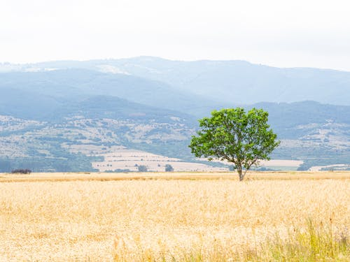 Foto stok gratis alam, awan, berawan, berkabut