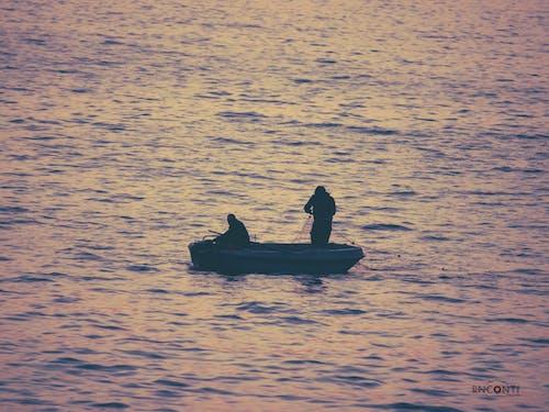 Free stock photo of catching fish