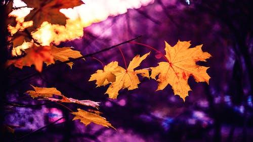 Foto d'estoc gratuïta de arbre, auró, bonic, brillant
