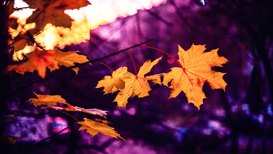 autumn, autumn leaf, autumn leaves