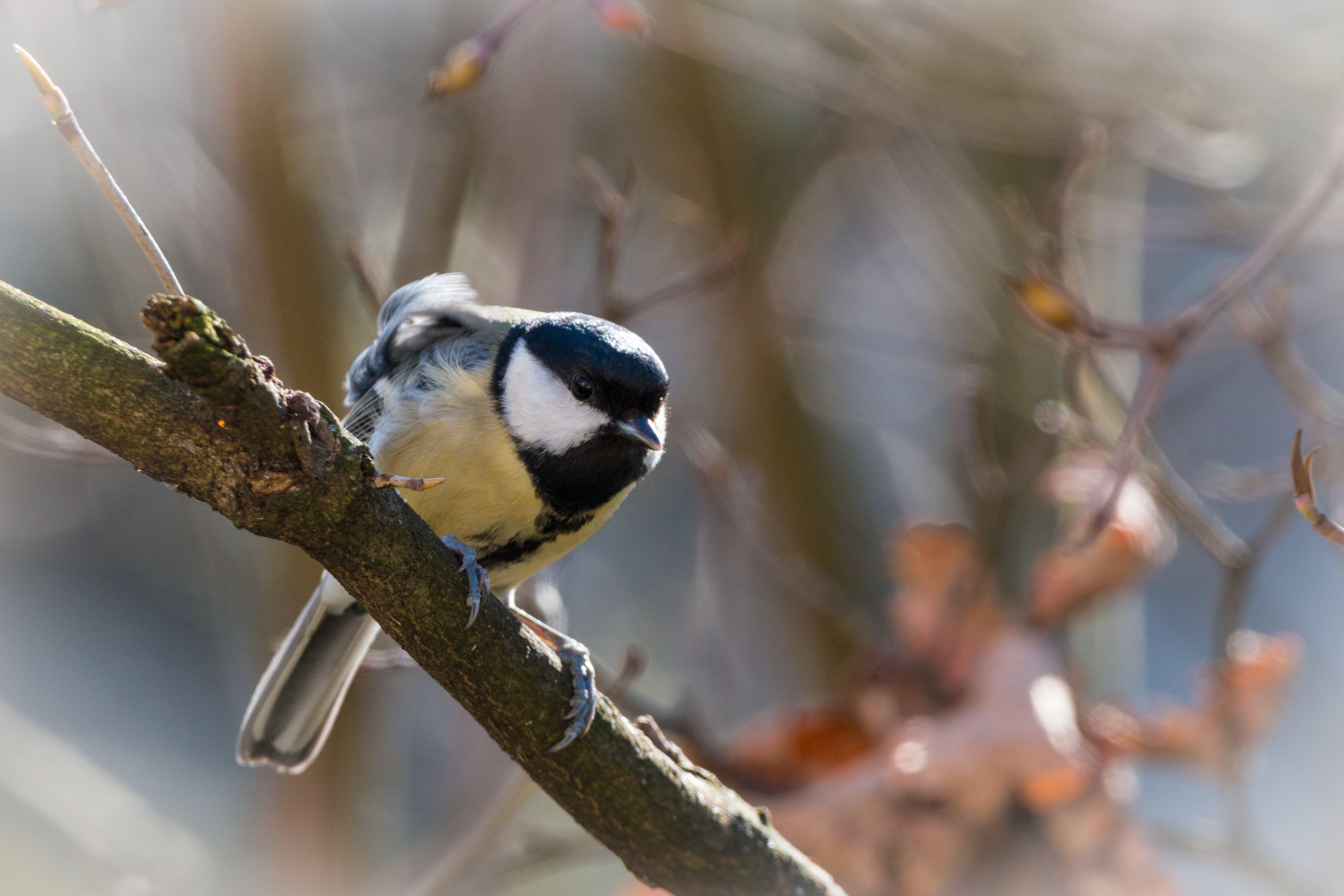 Free stock photo of bird, branch, garden, nature