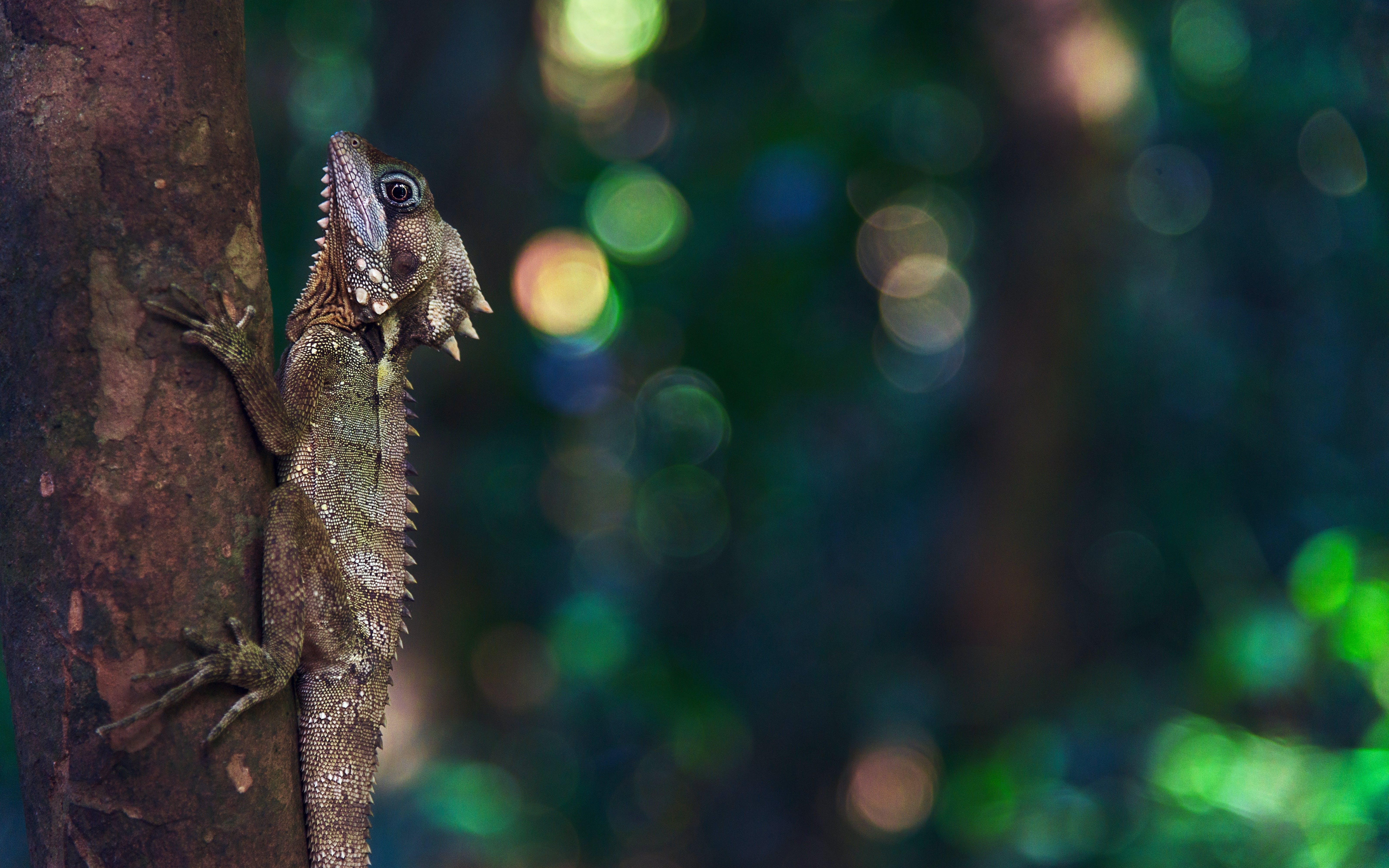 Free stock photo of nature, animals, zoo, lizard