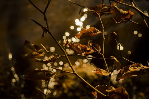 Free stock photo of branch, brown, close, fall foliage