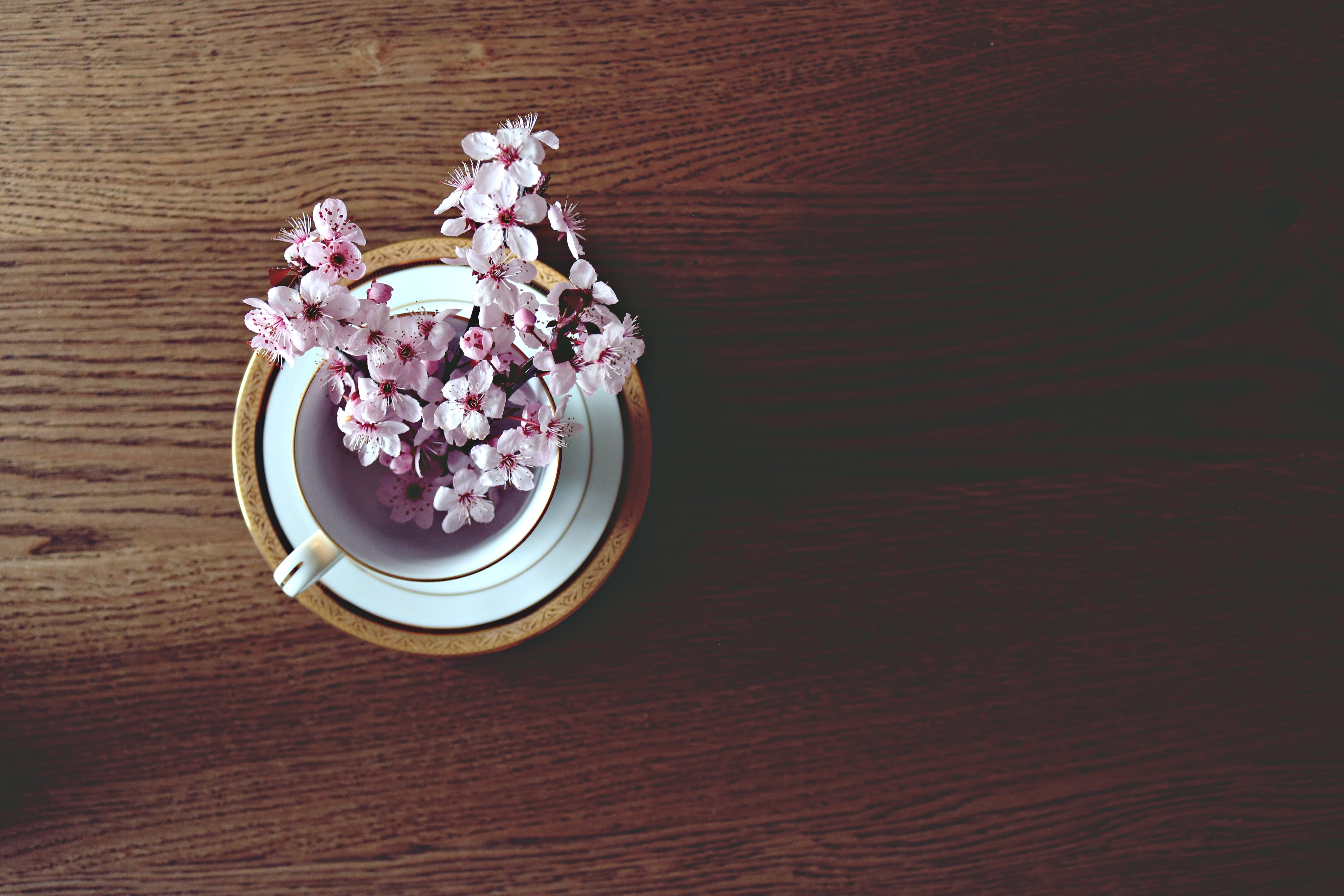Free stock photo of cup, flowers, table, spring