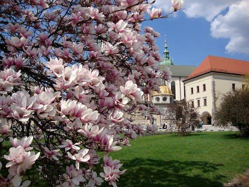 春天, 花 的 免費圖庫相片