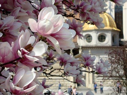 盛開的鮮花 的 免費圖庫相片