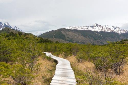 Foto d'estoc gratuïta de aventura, Camí, caminada, caminant