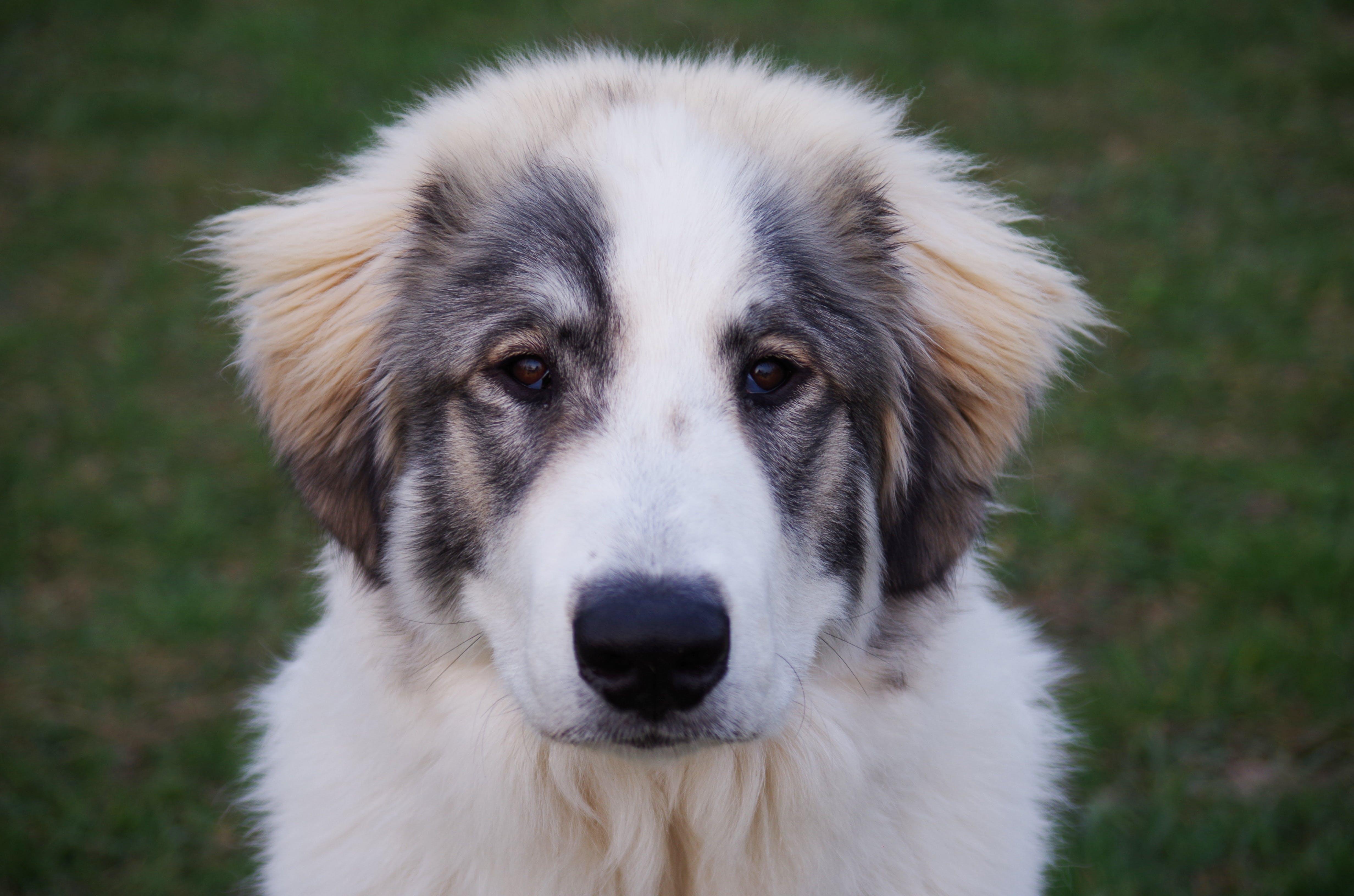 Free stock photo of mountain, dog, white, large