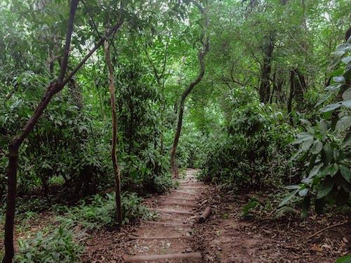 Kostenloses Stock Foto zu grün, natur, schritte, vegetation