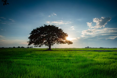 Free stock photo of countryside, environment, field