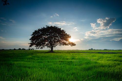 Free stock photo of countryside, environment, field, garden