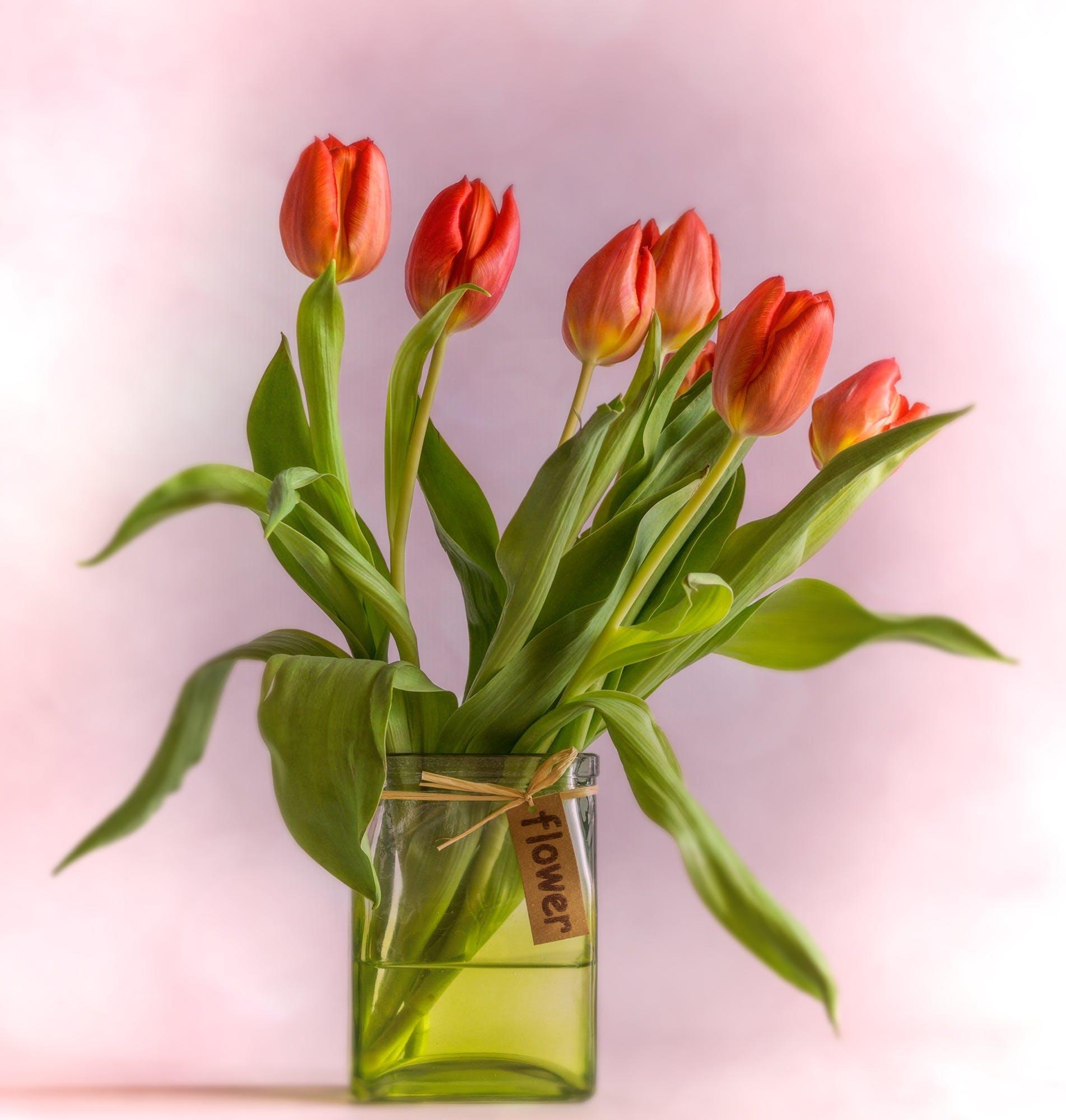 arrangement, bloom, blossomed