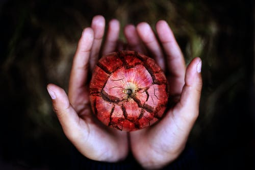 Red Apple on Persons Hand