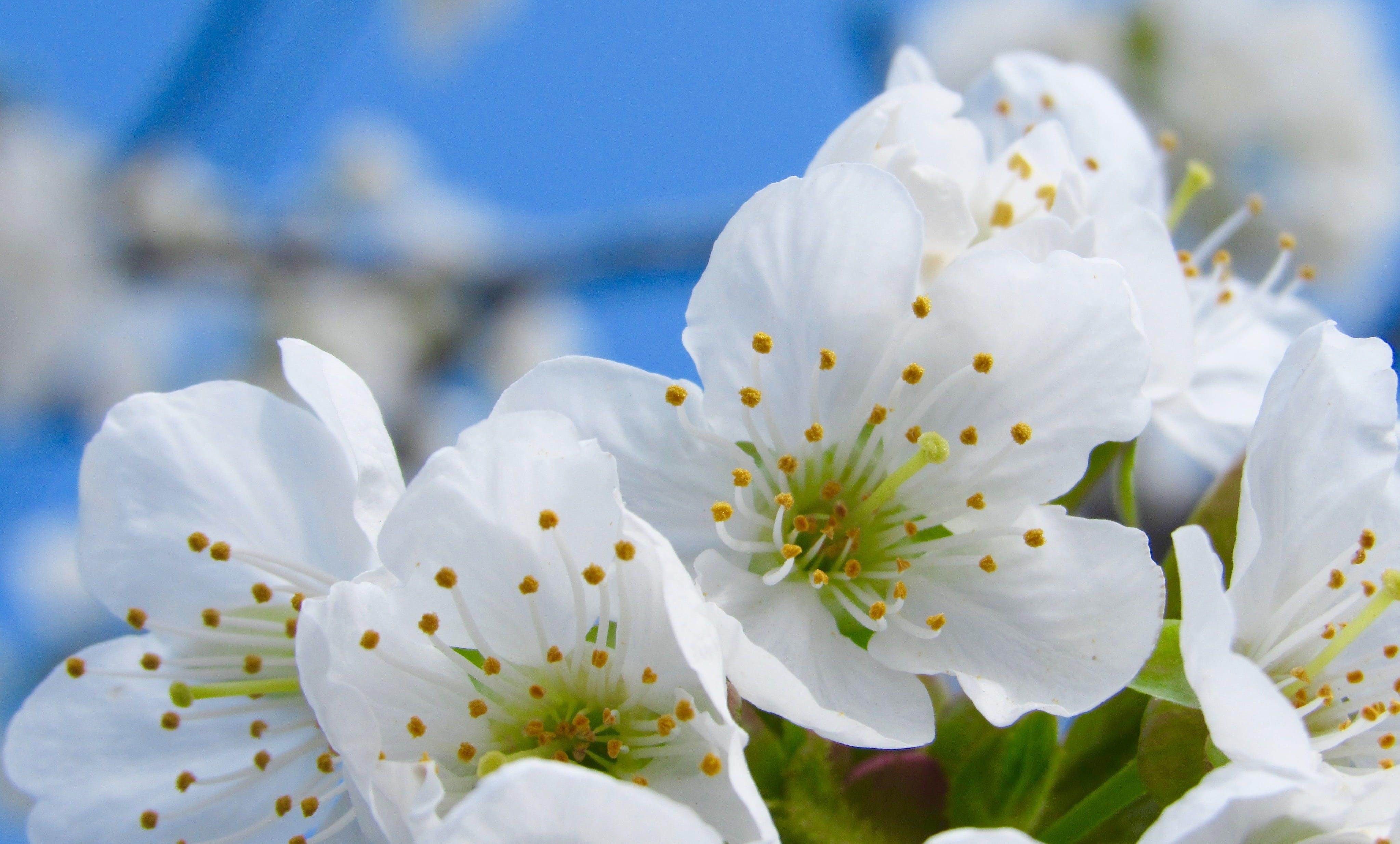 Free stock photo of nature, garden, plant, spring