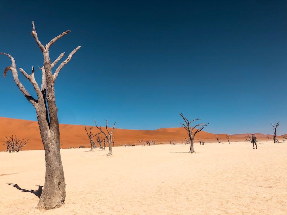 Albero Nudo Sulla Sabbia Marrone Sotto Il Cielo Blu