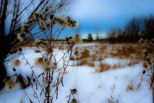 Free stock photo of dry flowers, forest, winter