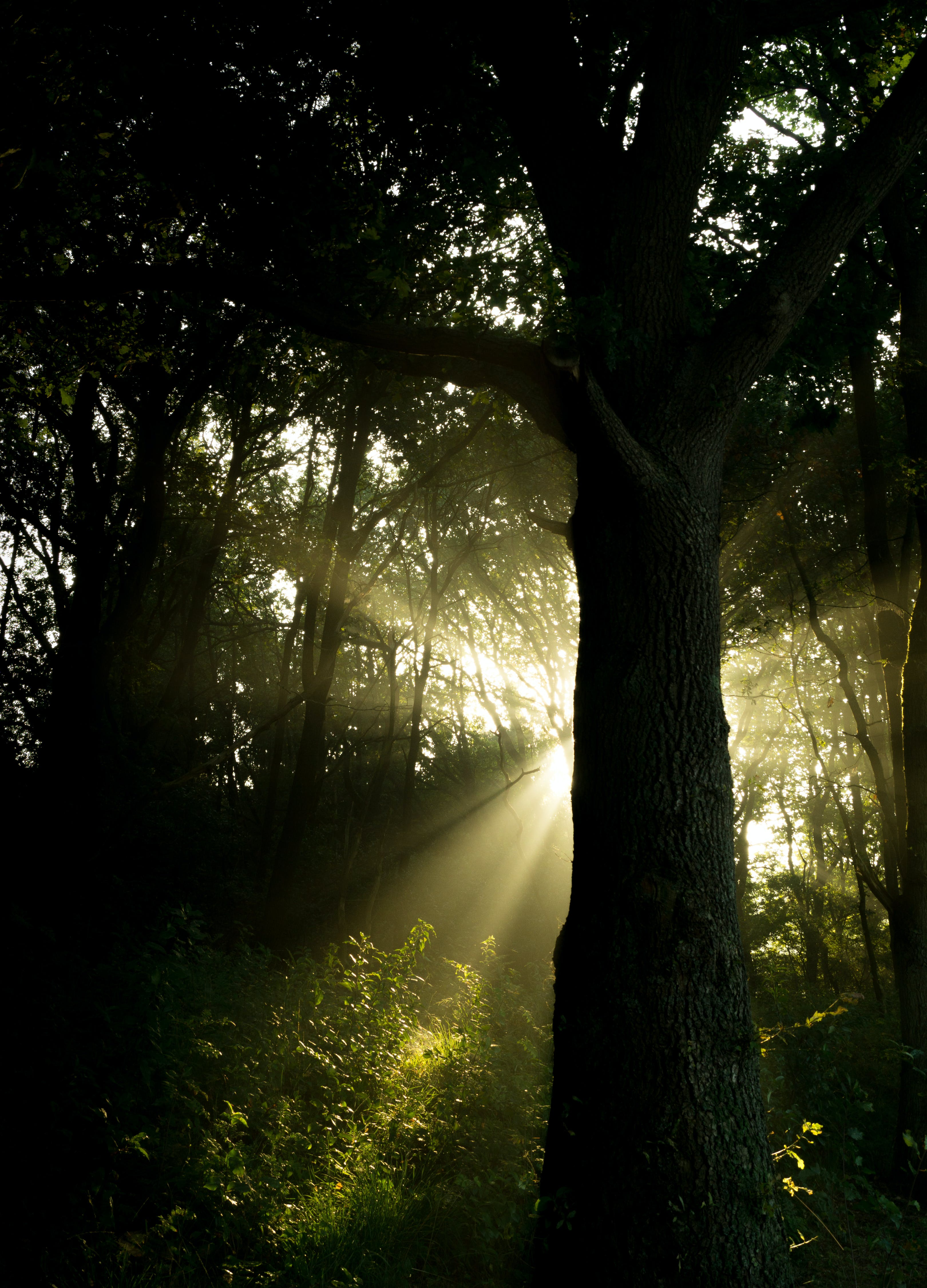 forest, ray of sunshine, sunbeams
