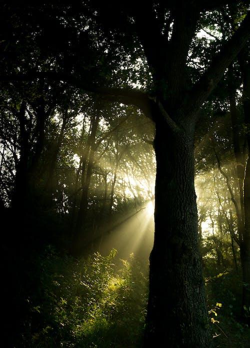Fotobanka sbezplatnými fotkami na tému les, lúč slnečného svitu, slnečné lúče