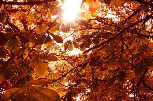 Ilmainen kuvapankkikuva tunnisteilla appelsiini, auringonlasku, auringonpaiste, auringonsäde