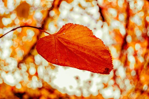 Ilmainen kuvapankkikuva tunnisteilla appelsiini, galway, irlanti, kevyt