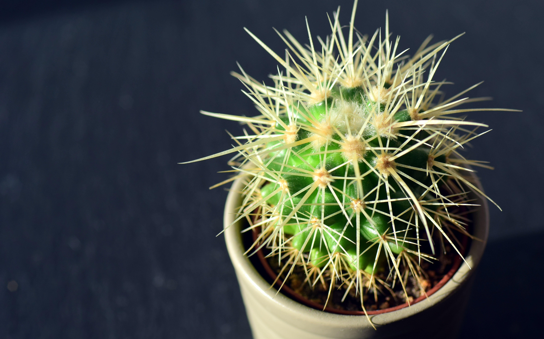 Green Cactus on White Pot