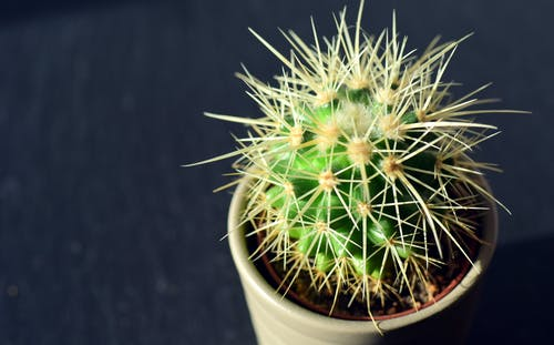 Green Cactus on White Pot