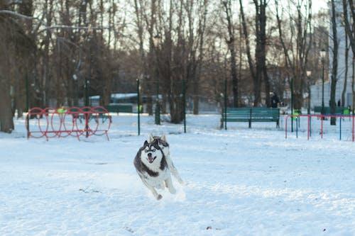 Free stock photo of dogwalk