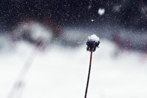 Бесплатное стоковое фото с зима, лед, ледяной, мороз