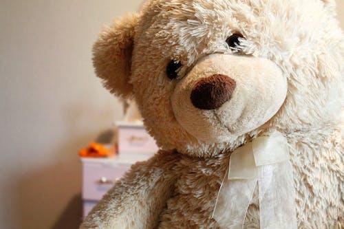 おもちゃ, テディベアの無料の写真素材