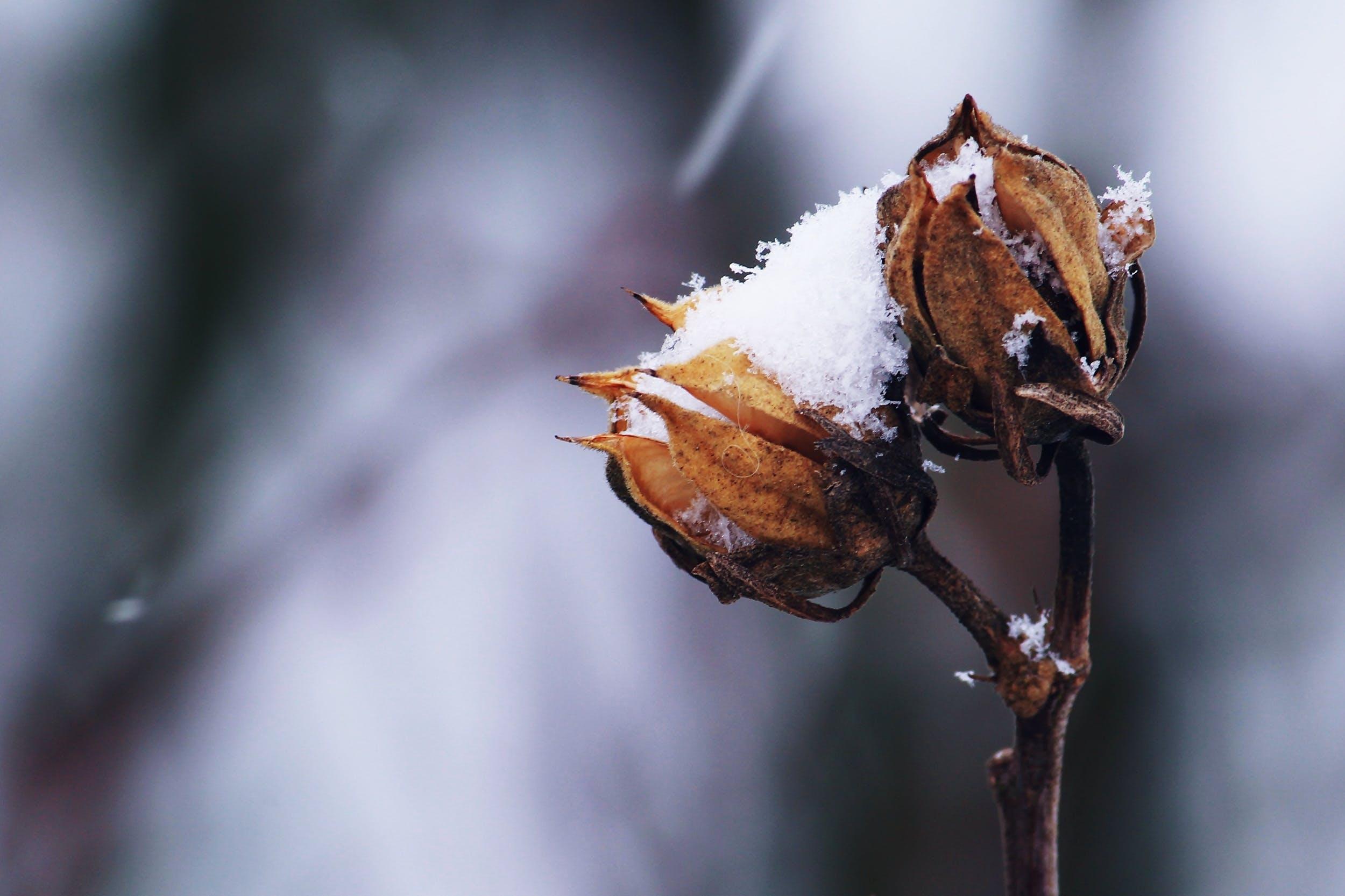 Foto stok gratis batang, bunga, cuaca, dingin