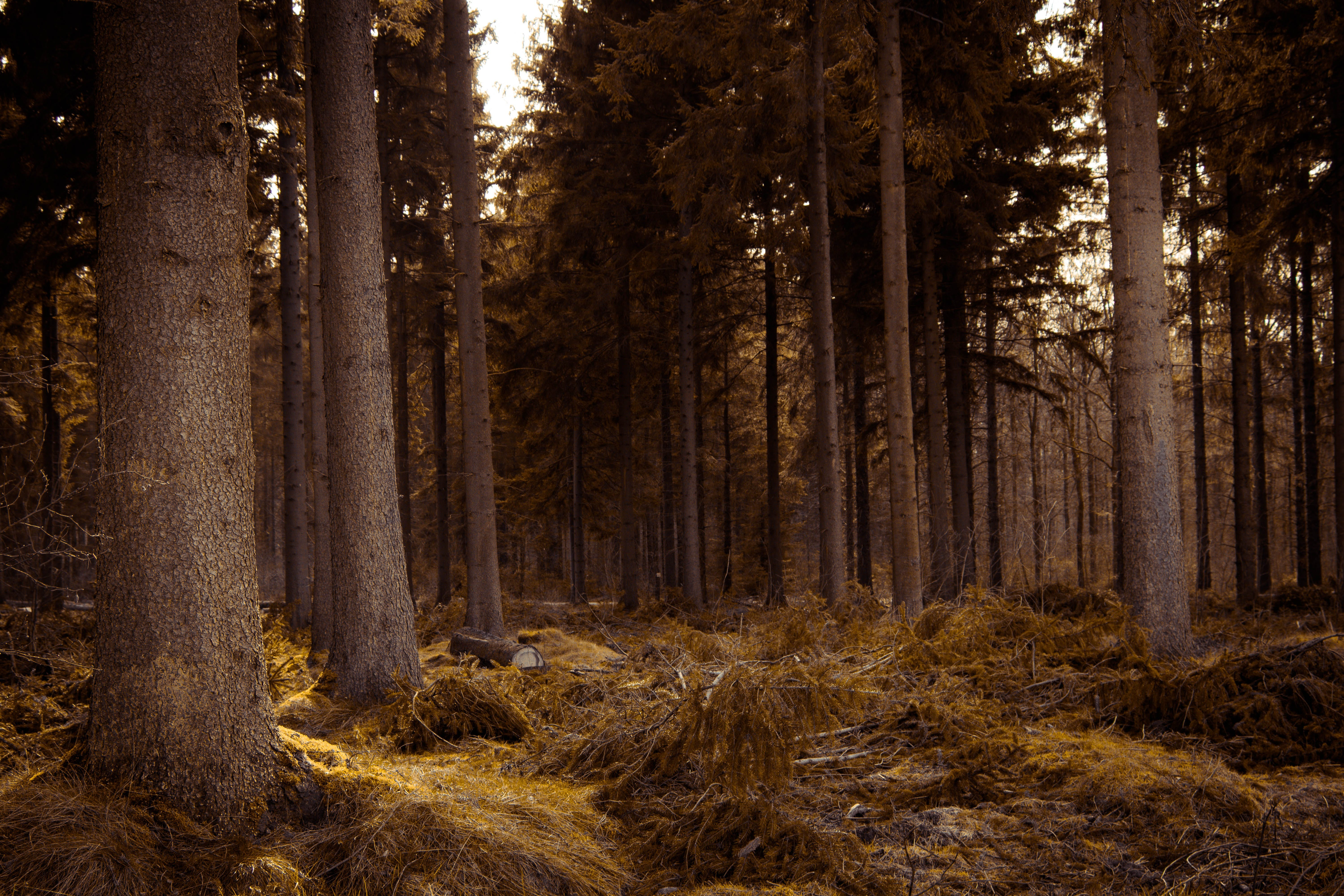 Free stock photo of colorful, fantasy, forest, gold