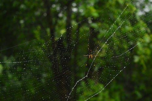 Fotos de stock gratuitas de araña, belleza, belleza en la naturaleza